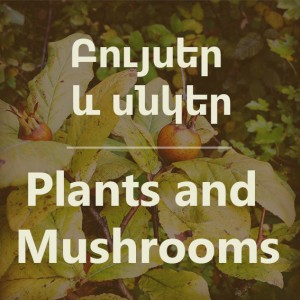 plants-mushrooms