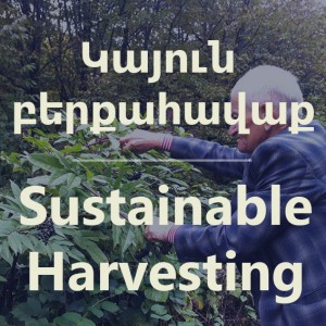 sustainable-harvesting