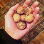 Ընկույզի մուրաբա | Walnut Muhraba